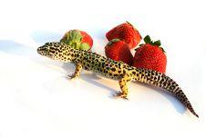 Free Gecko With Strawberrys 3 Stock Photo - 1914070