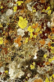 Free Lichen 5 Royalty Free Stock Images - 1918879