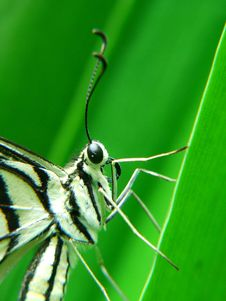 Free Butterfly Royalty Free Stock Photo - 1919285
