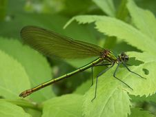 Free Dragonfly Royalty Free Stock Image - 1919636