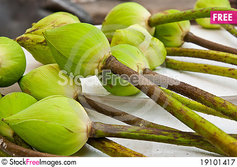 Free Green Lotus Buds For Pray Royalty Free Stock Photography - 19101417