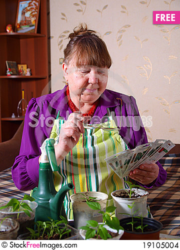Pensioner chooses the seed for planting Stock Photo