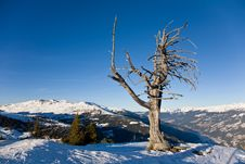 Free Dry Lonely Tree Stock Photography - 19102232