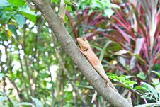 Free A Lizard Relaxes On A Branch Royalty Free Stock Photo - 19108655