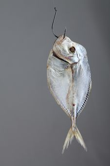 Fish On A Hook Royalty Free Stock Photo