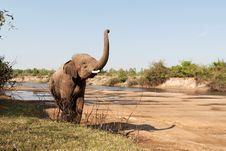 Free Elephant In The Wilderness Royalty Free Stock Images - 19109459