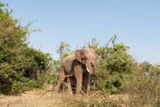 Free Elephant In The Wilderness Royalty Free Stock Images - 19109469