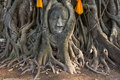 Free Head Of The Sand Stone Buddha Image Royalty Free Stock Photos - 19118188