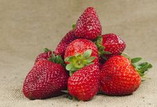 Free Strawberries Royalty Free Stock Photography - 19110057