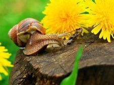 Free Snail Stock Photo - 19110780