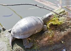 Free Turtle Basking In Sunlight On A Lake Shore Stock Photography - 19110782