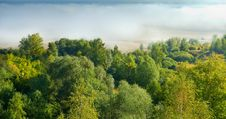 Free Landscape With Mist And Tree. Stock Image - 19115371