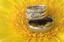 Free Wedding Rings Stock Photo - 19119190