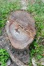 Free Tree Stump Stock Photography - 19122402