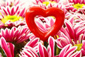 Free Heart With Flowers Royalty Free Stock Photos - 19126748