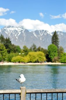 Free Queenstown Seagull Royalty Free Stock Photos - 19123038