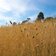 Free Grass Field Stock Photo - 19123380