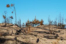 Free Bushfire Stock Photos - 19123393