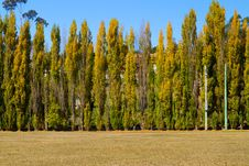 Free Poplars Stock Photography - 19123412