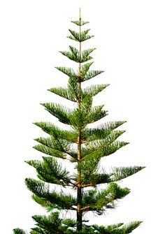 Exotic Green Tree Stock Image
