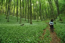 Free Pathway In Green Forest Stock Photography - 19124942