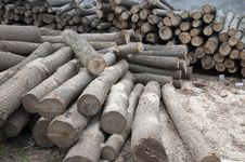 Free Wood Stock Images - 19125154