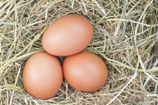 Free Eggs In Hay Royalty Free Stock Image - 19125656