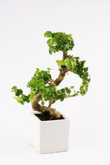 Free Bonzai Tree Stock Image - 19129451