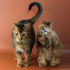 Cat And Bolonka Zwetna Stock Photography