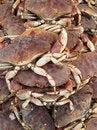 Free Crabs Stock Image - 19130221