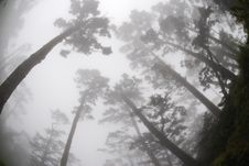 Free Foggy Forest Stock Photos - 19130433