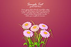 Free Bunch Of Daisy Royalty Free Stock Images - 19131639