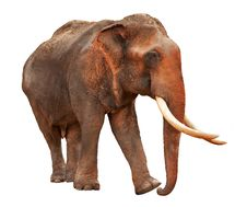Free Elephant With Clipping Path Royalty Free Stock Images - 19131829