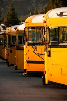 Free Line Of School Buses Royalty Free Stock Photography - 19132797