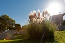 Free Grass In The Sun Royalty Free Stock Image - 19134516