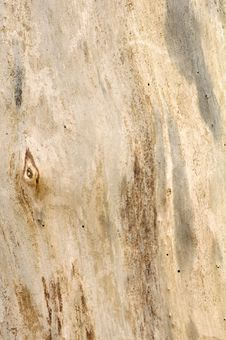 Free Barkless Tree Texture Stock Photos - 19138343
