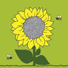 Free Sunflower Stock Photo - 19138520