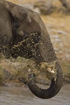 Free Elephant Blowing Water Royalty Free Stock Image - 19139026