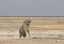 Free Elephant Stock Images - 19139054
