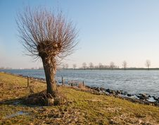 Free Willow At A Riverside Stock Image - 19139691
