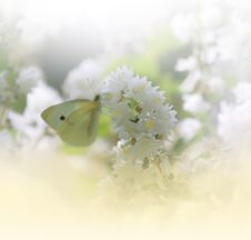 Beautiful Nature White Background.Abstract Wallpaper.Celebration,love.Holidays.Artistic Summer Flowers.Floral Art Design.Butterfly Royalty Free Stock Images