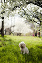 Free Dog Sitting In Grass Stock Image - 19145461