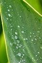 Free Green Nature Raindrops Stock Photos - 19146413