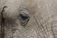 Free Close-up Of An African Elephant Face And Eye Royalty Free Stock Photography - 19140047
