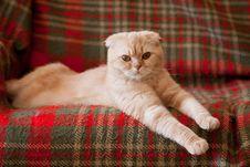 Free Cat Stock Photo - 19143370