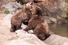 Free Brown Bears Stock Images - 19143574