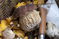 Mushrooms Basket, Italy Royalty Free Stock Photos