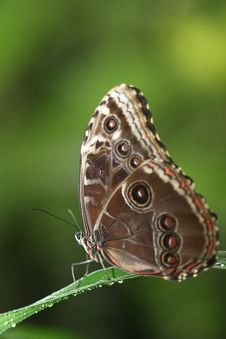 Free Tropical Butterfly Royalty Free Stock Image - 19144206