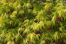 Free Foliage Stock Image - 19146421