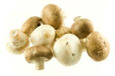 Free Mushrooms Stock Photography - 19147732